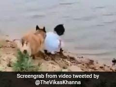 नदी किनारे खड़ी थी लड़की तभी उसके डॉगी ने किया कुछ ऐसा...सेलेब्रिटी शेफ ने शेयर किया Video