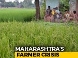 Video : Maharashtra Grapples With Farmer Suicides
