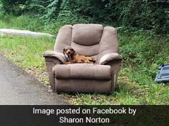 Heartbreaking Pics Show Puppy Dumped On Side Of Road With Chair, TV
