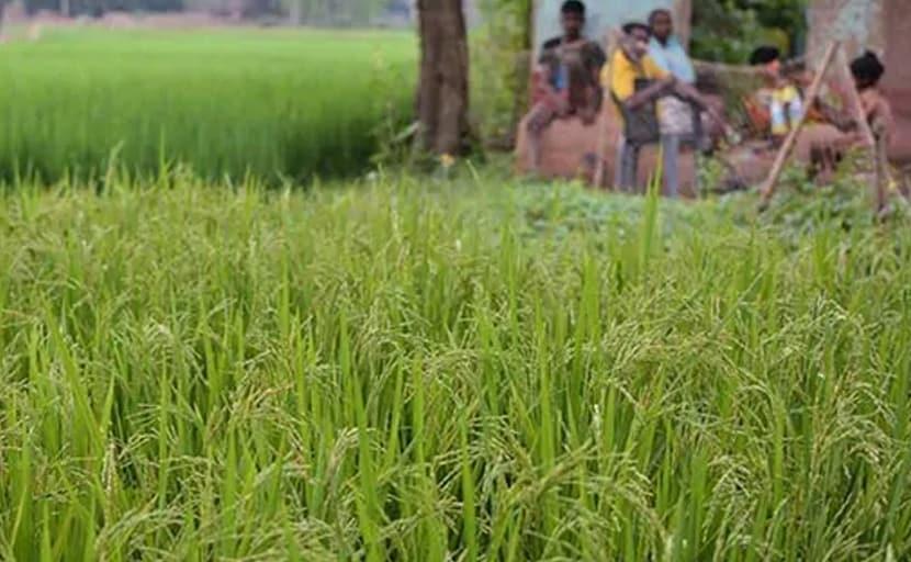 बजट से ठीक पहले खरीफ सीजन की सभी प्रमुख फसलों की MSP बढ़ी