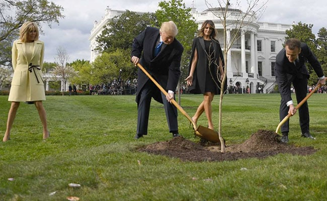 Tree Symbolising Donald Trump-Emmanuel Macron Friendship Has Died