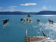 Greenland's Melting Sea Ice Captured In Viral Image Of Sled Dogs In Water