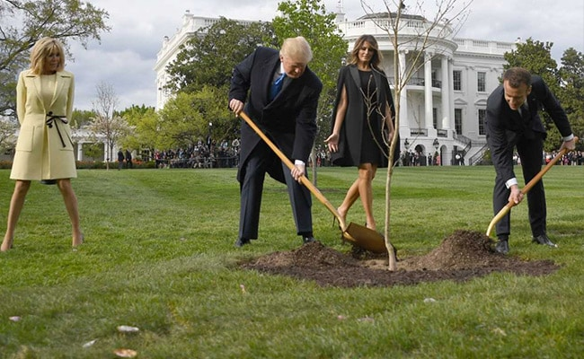 Oak Tree symbolizing Donald Trump, Emmanuel diacritic friendly relationship Is Dead