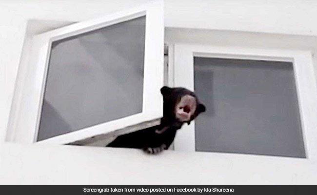 सिंगर ने कुत्ता समझ पाल लिया जंगली भालू, खिड़की से निकलते ही घरघराया तो लोगों की निकली चीखें... देखें VIDEO