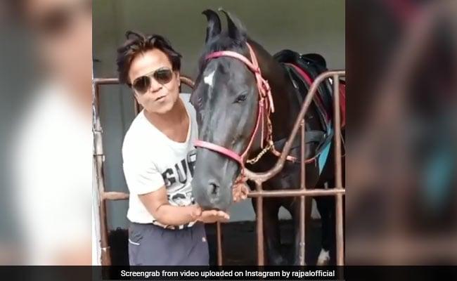 राजपाल यादव ने इस अंदाज में खिलाया घोड़े को दाना, Video हुआ वायरल