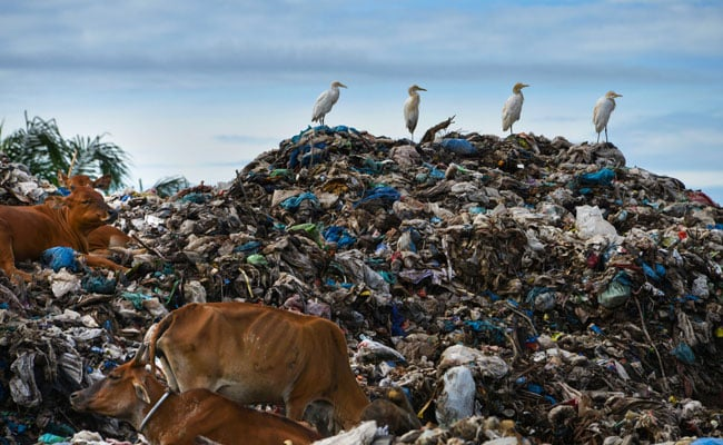 पर्यावरण दिवस : लॉकडाउन में कचरा बना मुसीबत, इकट्ठा करना, छांटने-बीनने और रिसाइकलिंग 25% तक प्रभावित