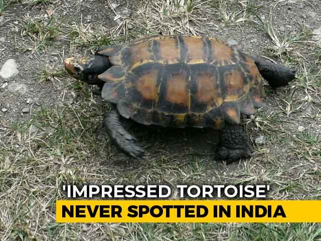 Video : Found In Jungles Of Arunachal: A Rare Species Never Seen In India Before