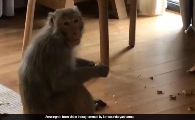 इस एक्ट्रेस के घर में घुसे बंदर ने यूं मचाया ऊधम, Video हुआ वायरल