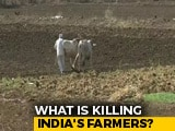 Video : Over 12,000 Farmers Committed Suicide In 3 Years: Maharashtra Government