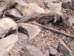 जंगलों तक पहुंची पानी की लड़ाई, एक दर्जन से ज्यादा बंदरों की मौत से सनसनी