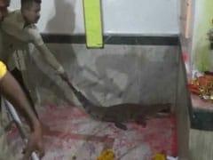 "Crocodile Strays Inside Gujarat Temple, Devotees Call It ""Auspicious"""