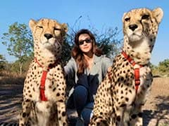 Kriti Sanon 'Chilling Like A Villain' In Zambia With Wild Cats