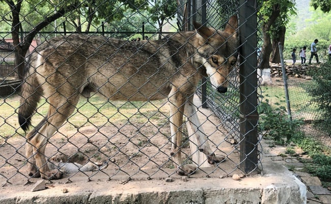 Animals In Pak Zoo Suffer In Heat, Agencies Tussle Over Its Management