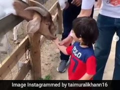 धर्मेंद्र के बाद तैमूर अली खान भी पहुंचे फार्म हाउस, बकरियों को खिलाया चारा- देखें Cute Video