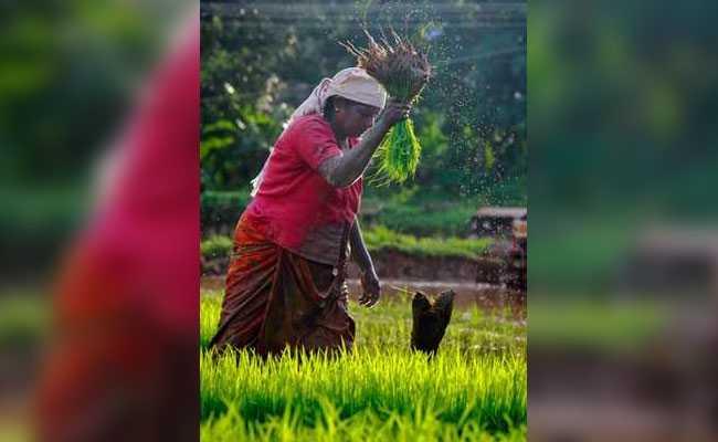 प्रधानमंत्री फसल बीमा योजना : ज्यादा से ज्यादा किसानों को फायदा पहुंचाने के लिए खास अभियान शुरू