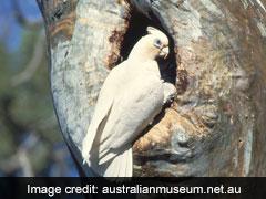 "Birds, Allegedly Poisoned, Fall From Sky In Australia ""Like Horror Movie"""
