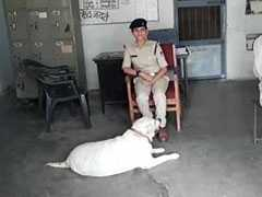 Murder Accused Family In Jail, Madhya Pradesh Cops Care For Pet Labrador