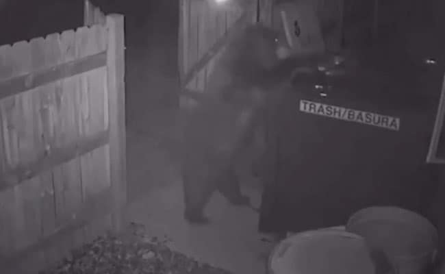 Hilarious Footage Shows Bear Casually Stealing An Entire Dumpster