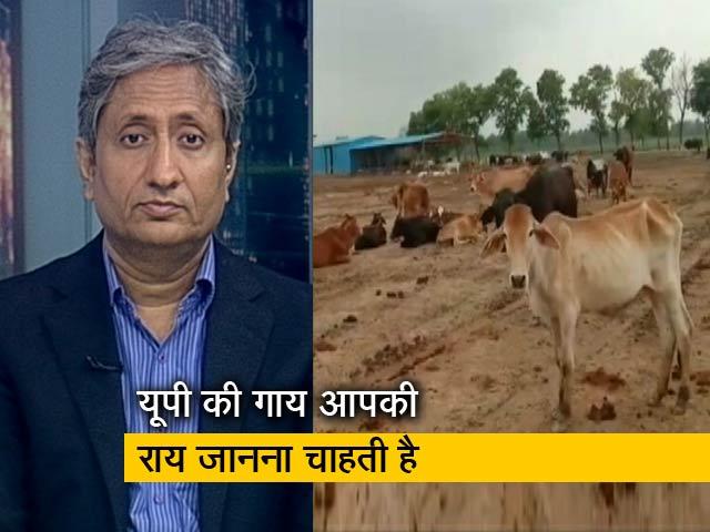 Videos : रवीश कुमार का प्राइम टाइम: योगी आदित्यनाथ के यूपी में गायों की हालत ऐसी क्यों?