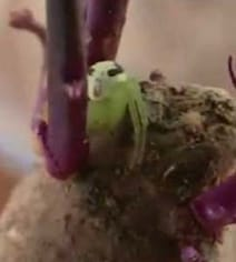 Spider With Human-Like Face On Its Back Horrifies The Internet. Watch