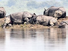 Five Rhinos Die From Suspected Anthrax Infection In Bengal