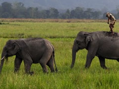 """Plan Bee"" Gets Elephants To Buzz Off Railway Tracks"