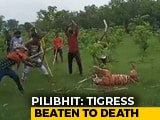 "Video : Tigress Beaten To Death In UP, Villagers Make Video With ""Commentary"""