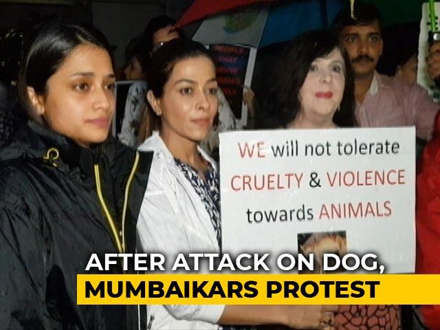 Video : On CCTV, Dog Trying To Take Shelter In Mumbai Building During Rain Beaten