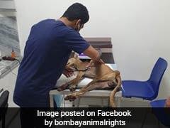 On CCTV, Dog Trying To Take Shelter In Mumbai Building During Rain Beaten