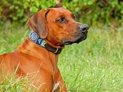 7 Dog Collars Your Furry Friend Will Appreciate