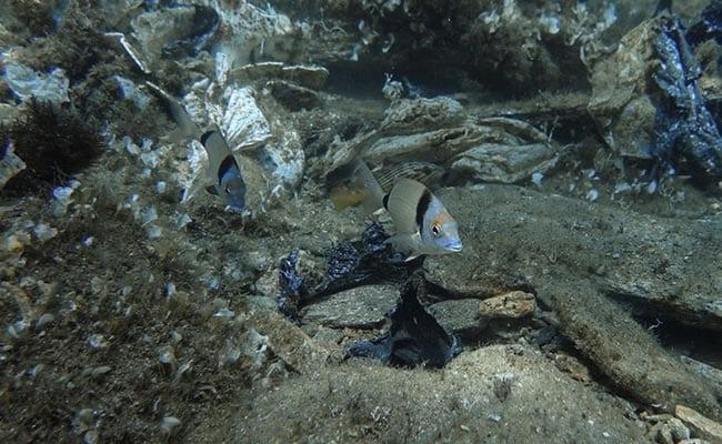 In Greece's Aegean Sea, Divers Find 'Gulf Of Plastic Corals'