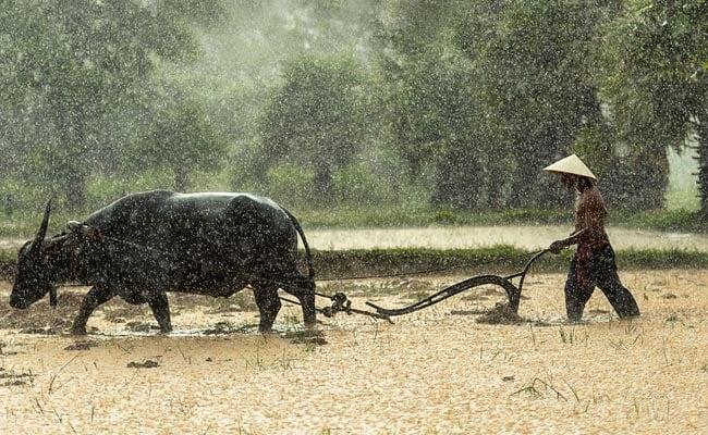 बैल बन खेत जोतती है महिला, कंधे पर हल रखकर बेटी संग खेती करने को मजबूर