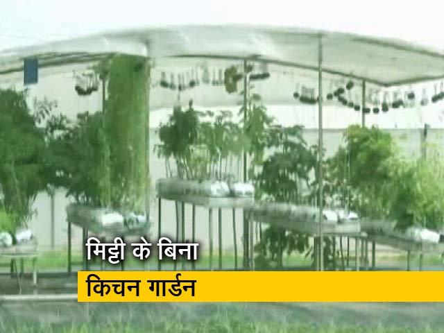 Video : अब बिना मिट्टी के किचन गार्डन की खूबसूरती बढ़ाएंगे पौधे