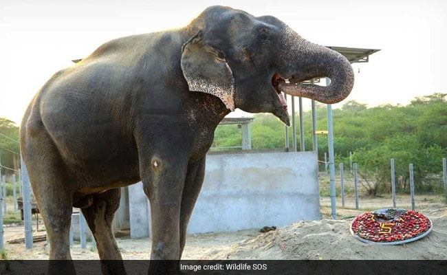 Elephant Rescued From Captivity Celebrates 5 Years Of Freedom - With Cake