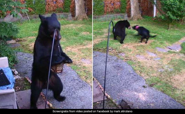 Caught On Camera: Fearless Dog Chases Away Bear From Backyard