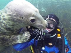 Playful Seal 'Shakes Hands' With Diver, Social Media Goes Aww...