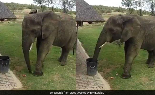 हाथी ने कचरे को डाला डस्टबिन में, लोग बोले- 'जानवर कर सकते हैं तो इंसान क्यों नहीं?' देखें VIDEO