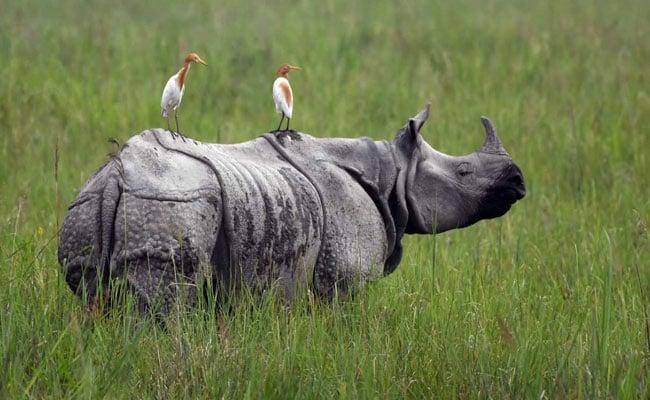 असम के राष्ट्रीय उद्यान से हटाया जाएगा राजीव गांधी का नाम