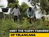 Video : Telangana's First Organic Village Is Leading The Way In Natural Farming