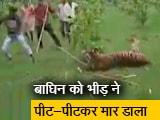 Video : उत्तर प्रदेश :पीलीभीत में ग्रामीणों ने बाघिन को पीट-पीटकर मार डाला