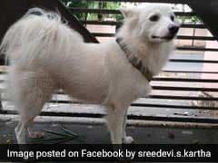 डॉगी के 'अवैध संबंध' होने के कारण मालिक ने निकाला घर से, बोला- 'पड़ोस के कुत्ते ने बिगाड़ा...'