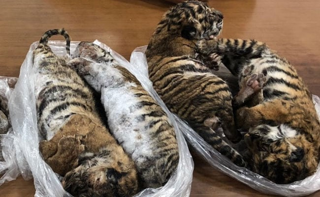 7 Frozen Tiger Carcasses Seized From A Car In Vietnam