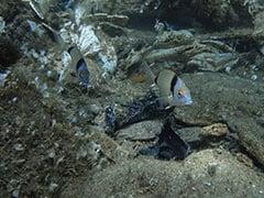 "In Greece's Aegean Sea, Divers Find ""Gulf Of Plastic Corals"""