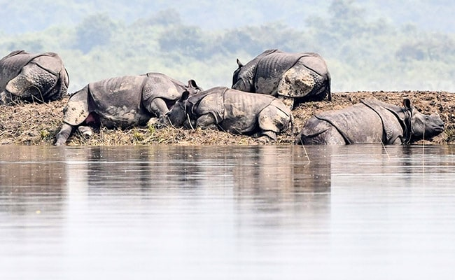 Rare Rhinos Among More Than 200 Animals Killed In Assam Floods