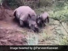 Baby Rhino Filmed Trying To Wake Its Dead Mother In Heartbreaking Video