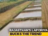Video : How One Rajasthan Village Still Has Water Even After A Long, Dry Summer