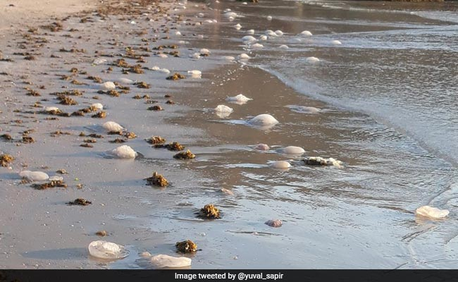 Millions Of Jellyfish Headed To Israel's Coast, Lifeguards Warn Swimmers