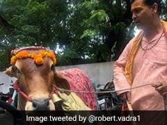 फेसबुक पर VIDEO शेयर करते हुए रॉबर्ट वाड्रा ने कहा- पवित्र गाय से अपना भविष्य जानें