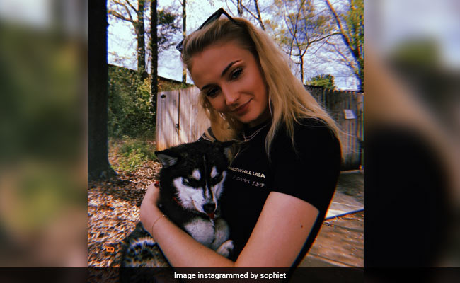 Sophie Turner And Joe Jonas' Dog Dies In 'Freak Accident': Reports