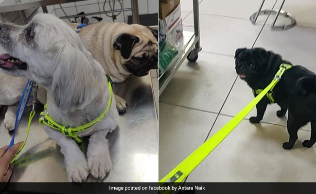 4 Dogs Left Homeless After Shocking Murder Of Gurgaon Family Find A House